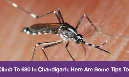 Dengue Cases Climb To 680 In Chandigarh: Here Are Some Tips To Prevent Dengue