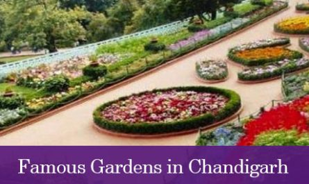 Famous Gardens in Chandigarh